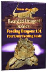 Daily Feeding Guide