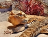 Is a Bearded Dragon the Right Pet for You?