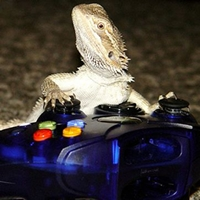 Bearded Dragon Playing Video Games?