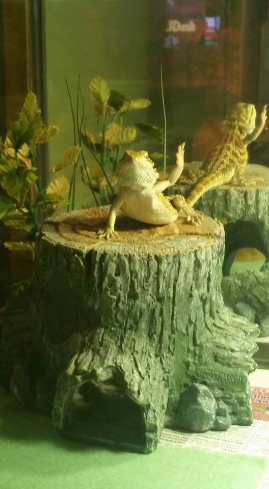 bearded dragon toy