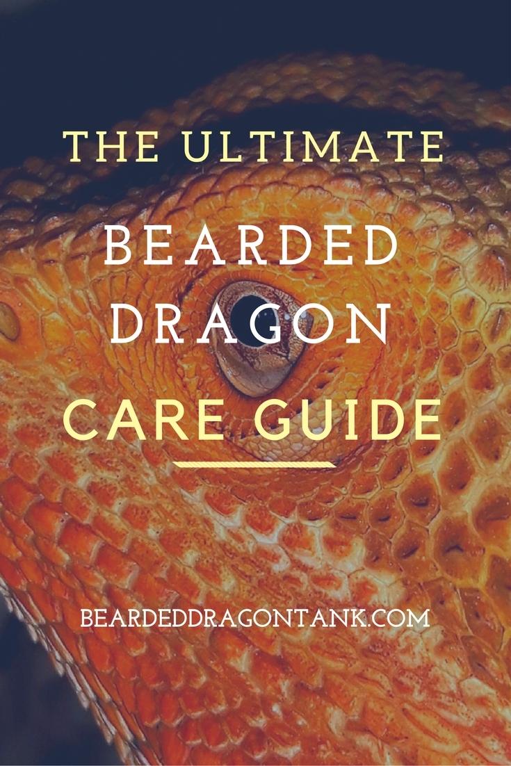 Bearded Dragon Care Sheet