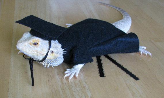 graduation-costume