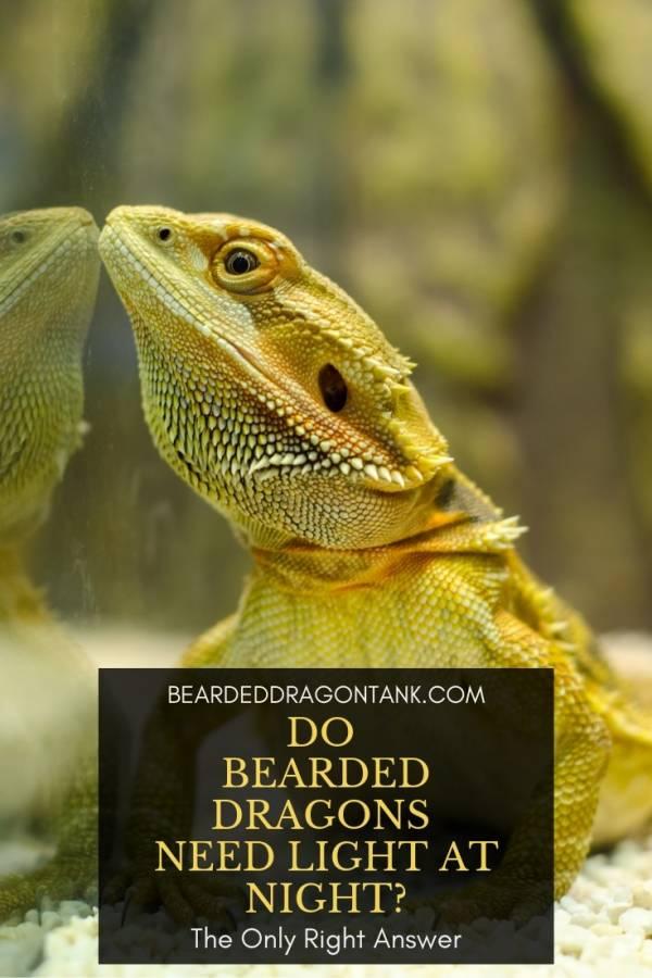 do bearded dragon s need light at night