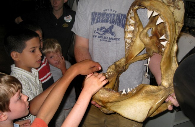 Inspecting a shark jaw during Academy Explorers Camp. Credit: Hollie Barattolo/ANSP