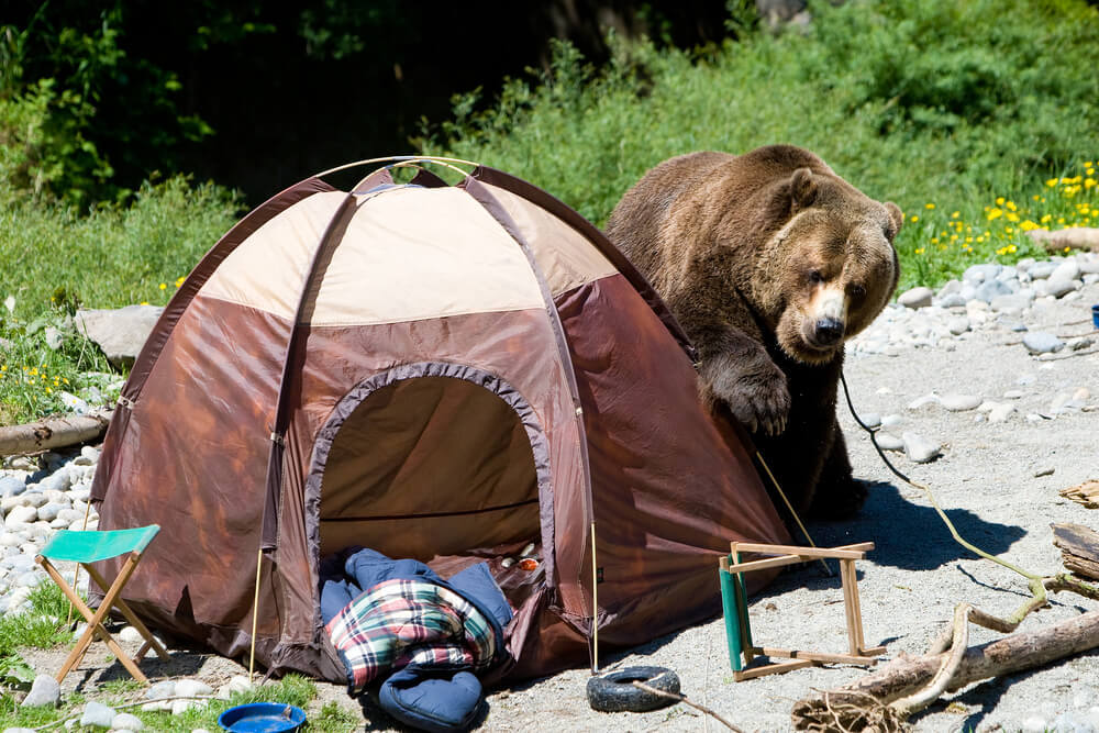 The Best Way On How to Hang a Bear Bag 1
