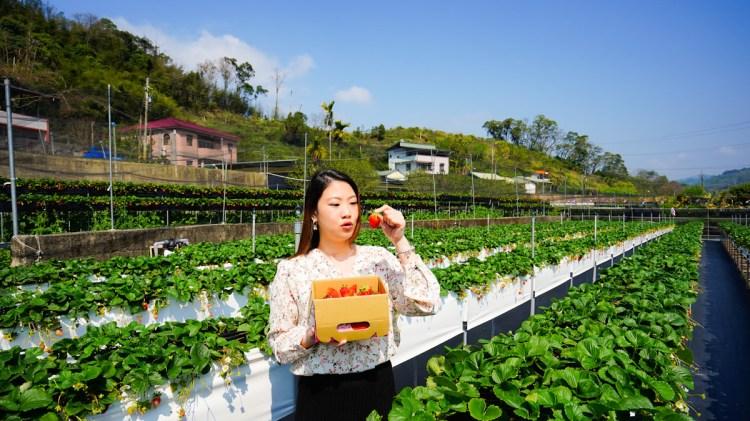 大湖草莓推薦 紅色琉璃瓦-環境乾淨採草莓也能穿美美不會弄髒,適合都市人的優質草莓園