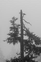 Morning mist, Alaska