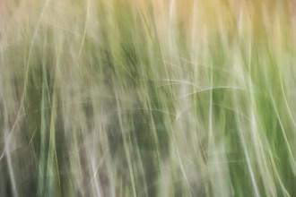 Grass, AK