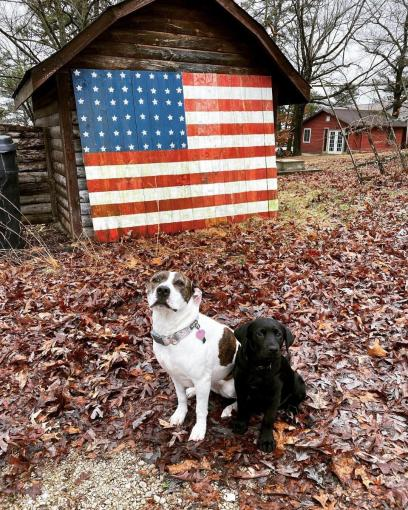flag dogs