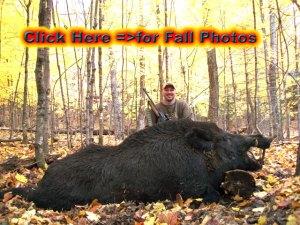 How to Boar Hunt Russian Boar