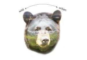 Bear montage_map