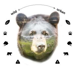 Bear montage_map2
