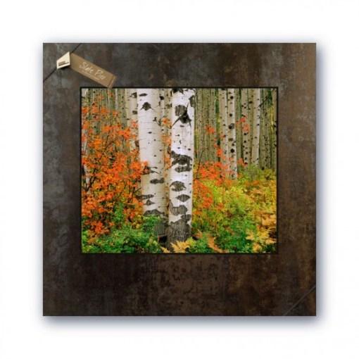 20 x 20 Picture on Slate - Red Bush & Aspen, McClure Pass, Colorado