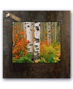 20 x 20 Picture on Slate - Red Bush & Aspen, McClure Pass, Colorado