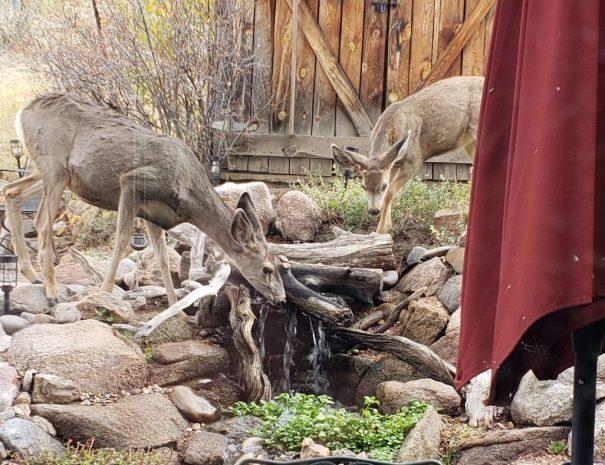Deer 2 (2)