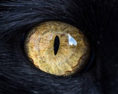 Macro Cat Eyes Portraits - by Andrew Marttila