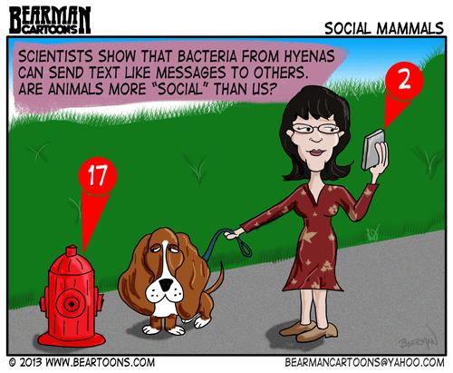 11-14-13-Bearman-Cartoon-Animal-Text-Message