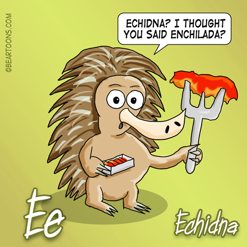E-is-for-echidna-Animal-Alphabets-Bearman-Cartoons