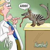 N is for Numbat Animal Alphabets Bearman Cartoons