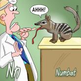 N is for Numbat Animal Alphabets Bearman Cartoons