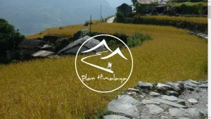 Plan Himalaya does not only care for creating unique travel experiences...