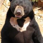 Sun Bear e BSBCC