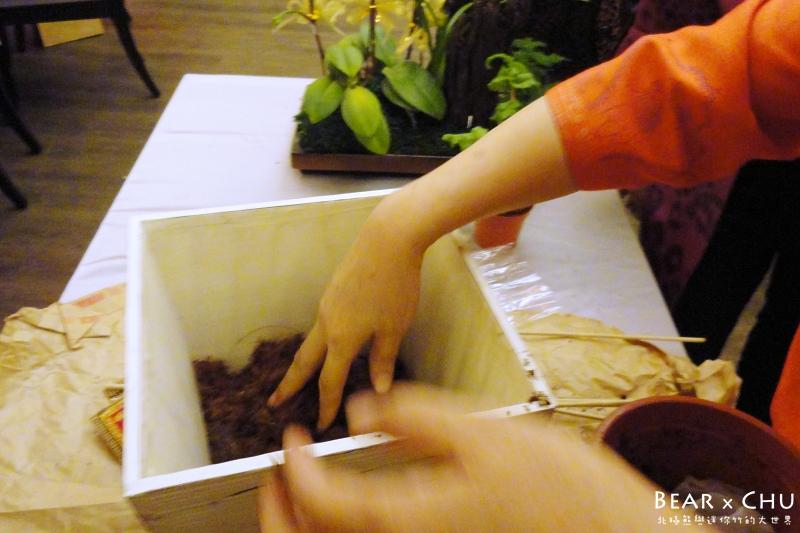 過年佈置DIY組合盆栽鳳梨_20110120-172006.JPG