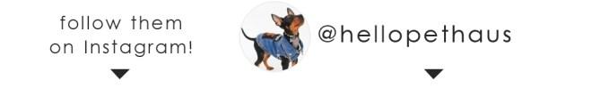 Follow on instagram! Pethaus.