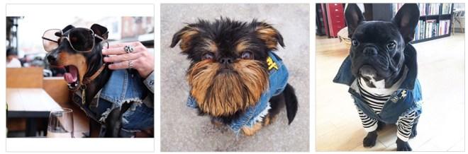 犬用デニムベストのおしゃれな着方。