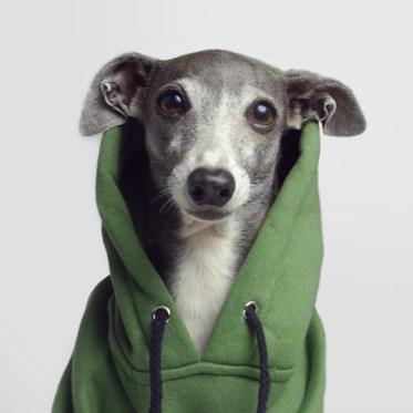 店休日のお知らせ(Pethaus / Combat hoodie)