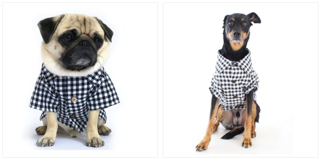 Dog thread - The classic shirts / gingham / from USA