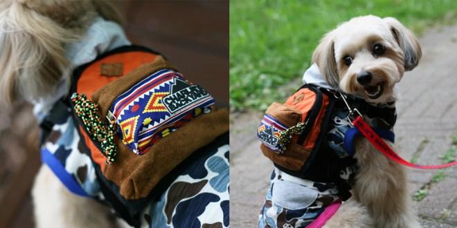 Charlie's Bag - ORANGE - 愛犬用リュック(チワワ)