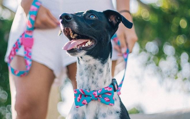 Zee.dog - Dog bowtie - Tetris