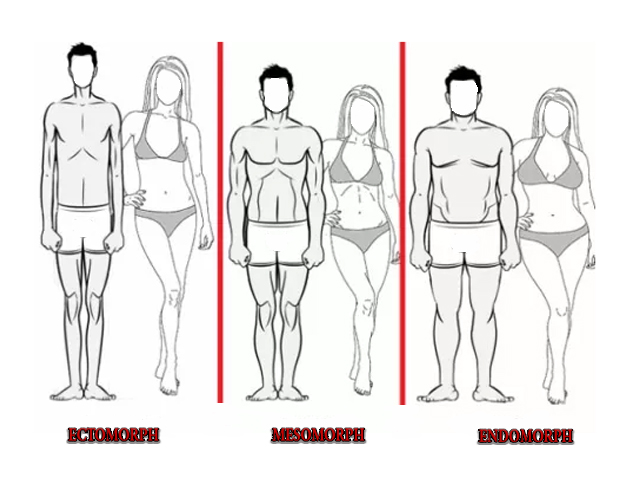 how to draw distinct body types