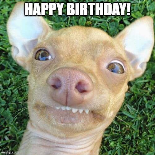 Cute Dog Happy Birthday Meme Happy Birthday Memes And Images
