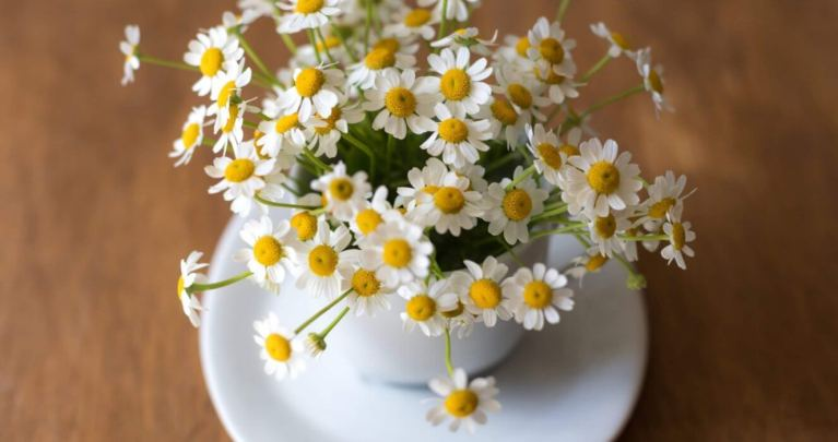 Flowers that help relieve stress & anxiety