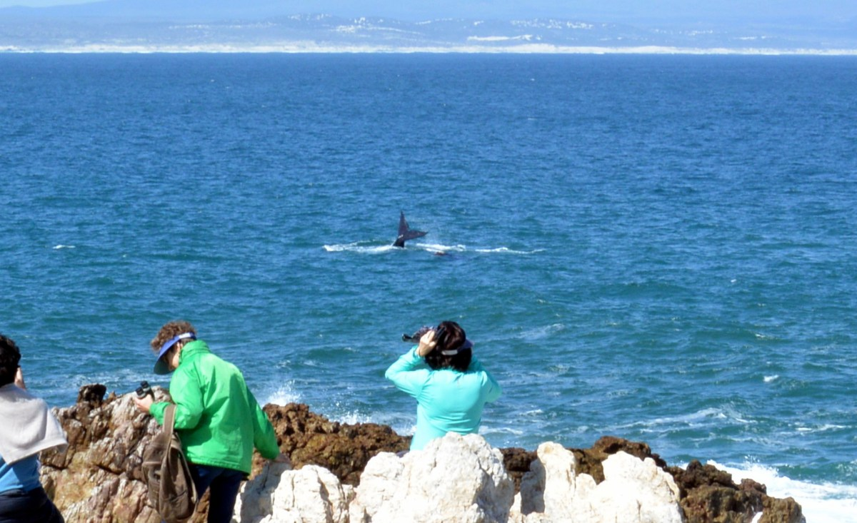 VIDEO: Onshore Whale Watching