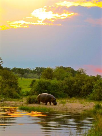 Sabi Sands, South Africa