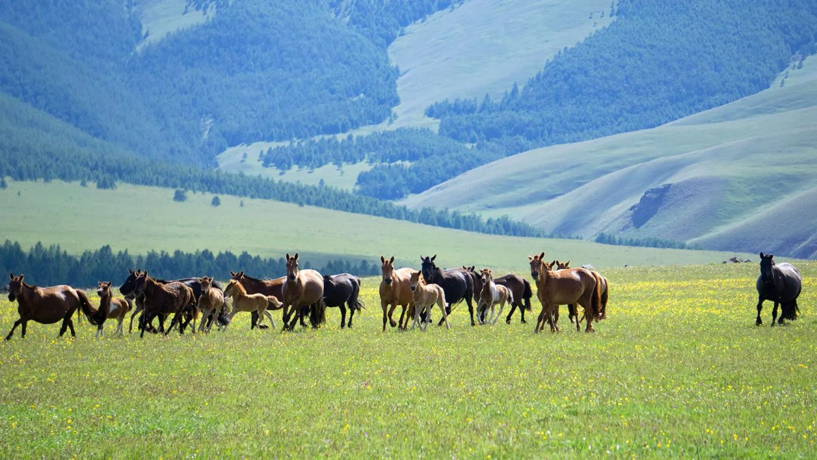 Hiking Khangai Nuruu
