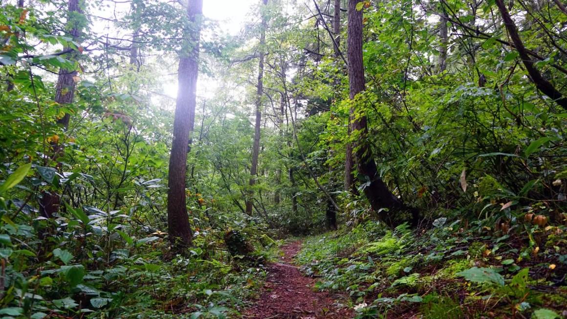 Shinetsu forest