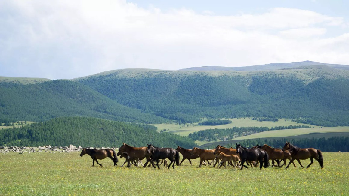 travel after coronavirus Mongolia