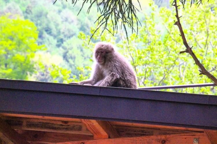 猿がこんなに身近にと思いましたが序の口でした。