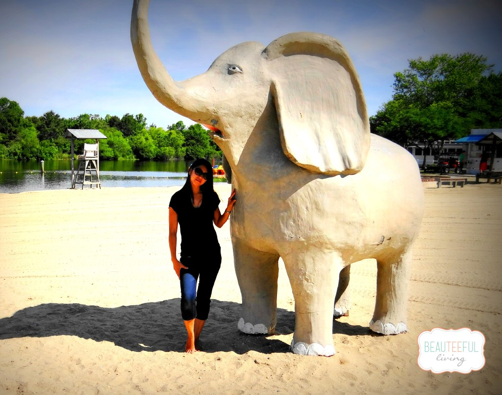 elephantandme