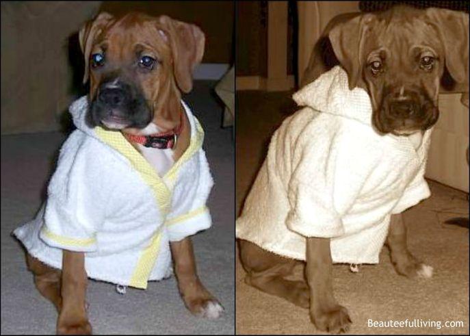 Lola in bathrobe
