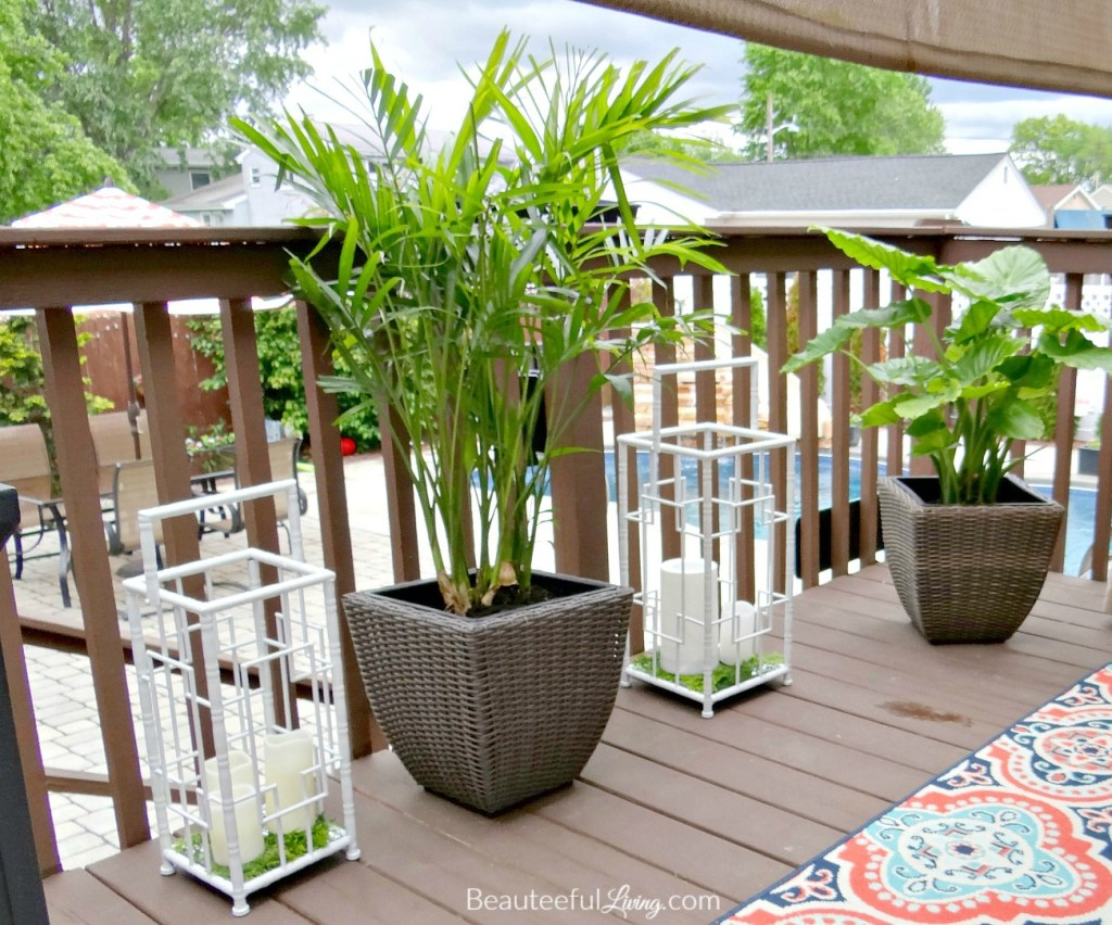 Tropical Plants - Beauteeful Living