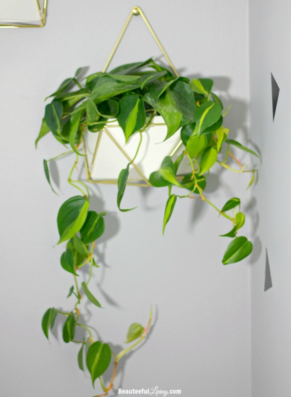 Heartleaf Philodendron Hanging Plant - Beauteeful Living