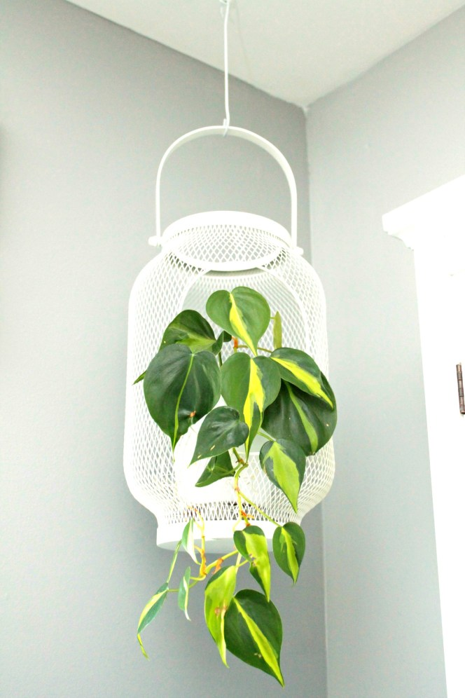Hanging Lantern with plant - Beauteeful Living