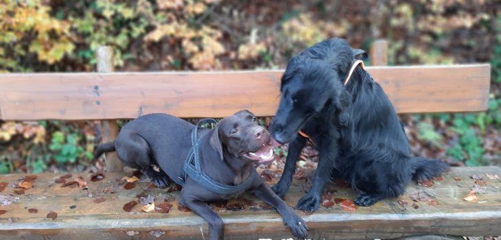 Caro's Hundesalon