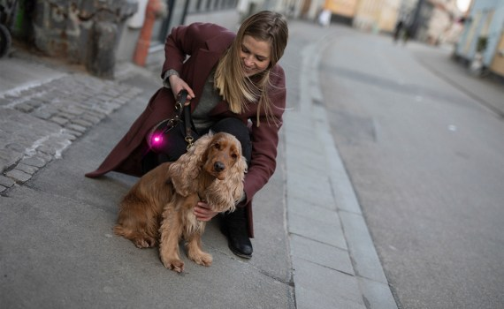 Orbiloc Sicherheitslicht, Caros Hundesalon