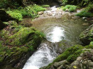 image 62 300x225 - 埼玉県飯能市の名栗川渓流釣り情報